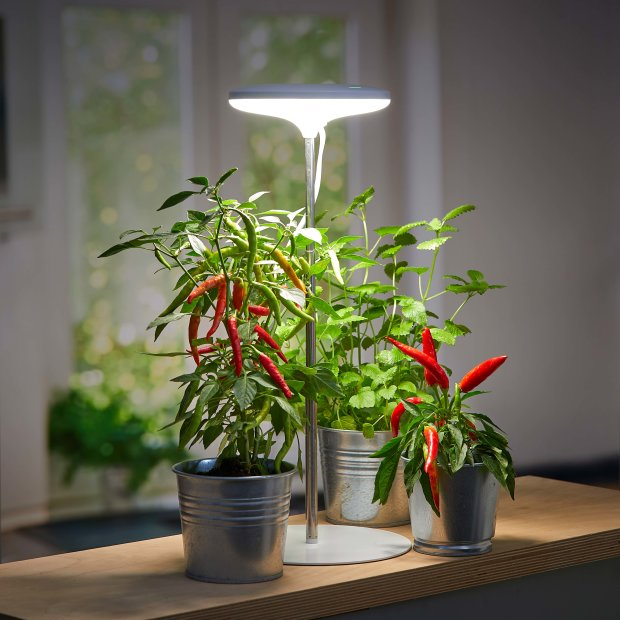 Northpoint LED Pflanzenleuchte Pflanzenlicht Pflanzenlampe 14W mit Teleskopstab und Standfuß 4000K Lichtfarbe
